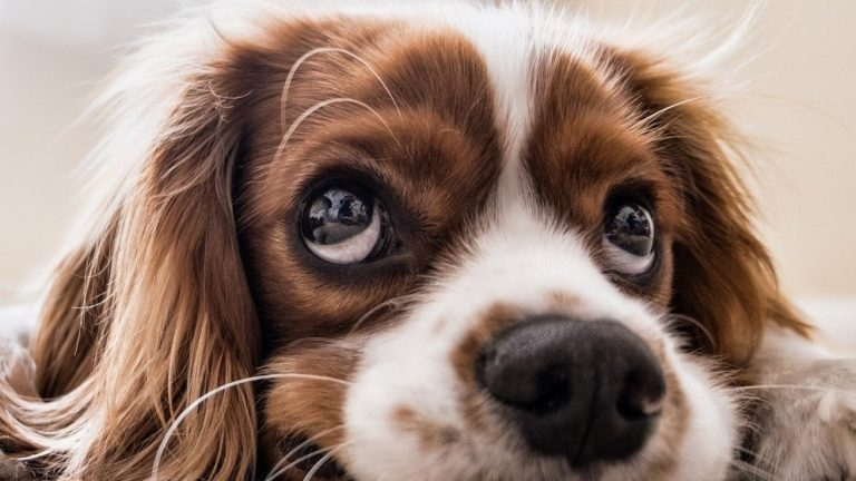 New Study Shows That Dogs Do Not Age As Originally Thought—It Is Much More Complicated